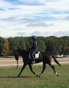 blue-ridge-farm-sport-horse-fable