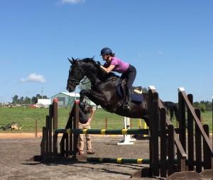 Sport Horse Sales Ohio