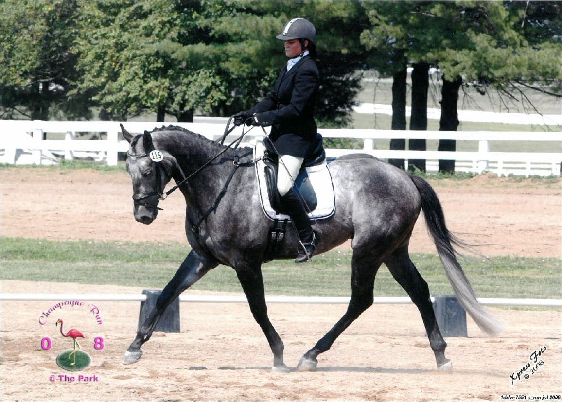Holly Dressage Champage Run