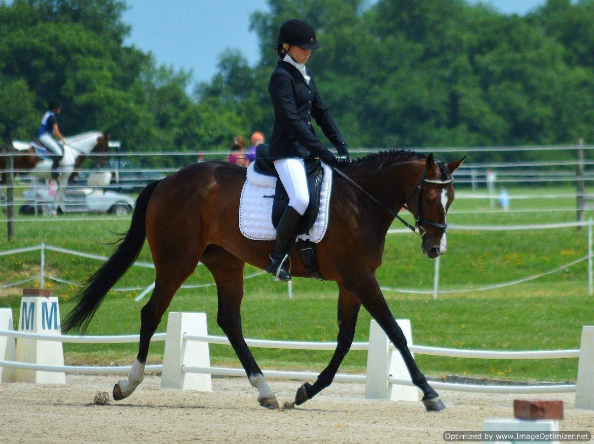Solar Flare Blue Ridge Farm Sport Horse Sale Dressage