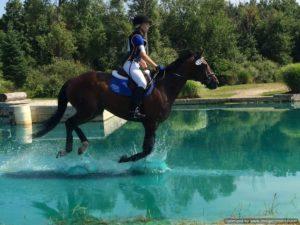 Solar Flare Sport Horse Sale