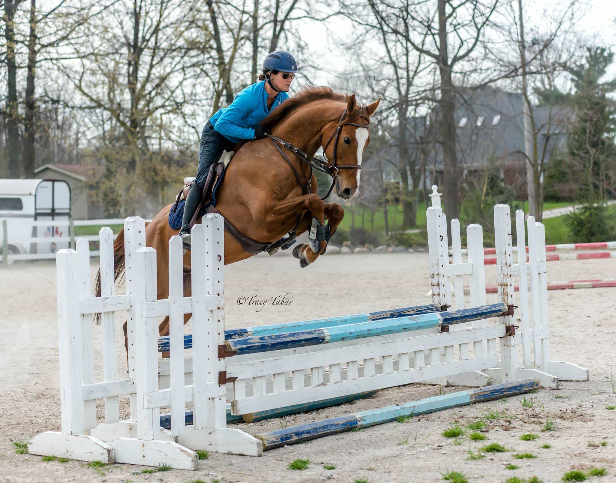 Eventing, Dressage, Hunters/Jumpers