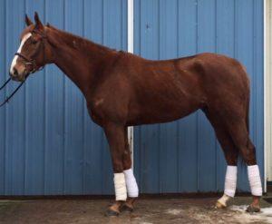 Eventing Horse Sales Ohio